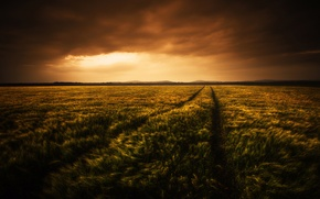 Picture light, clouds, Field, the evening
