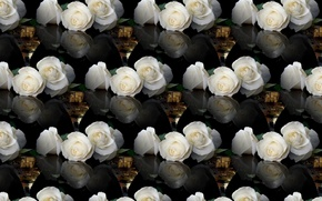Picture background, wine, glass, rose