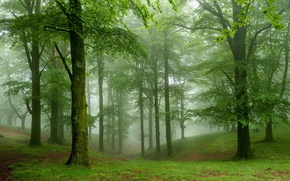 Wallpaper greens, forest, grass, trees, fog, moss