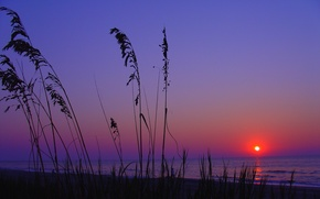 Picture sea, beach, landscape, sunset, nature