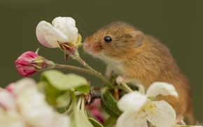 Picture flowers, animal, branch, mouse, rodent