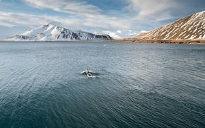 Picture sea, snow, mountais, seagulls, killer whales