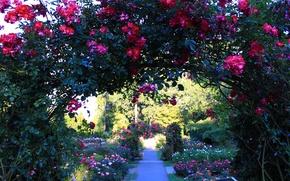 Picture Park, roses, Flowers, garden, arch, the bushes, park, flowers, garden, roses
