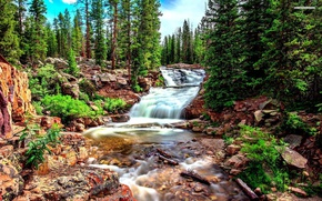 Picture rock, forest, river, tree, waterfall