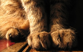 Picture cat, paws, sitting
