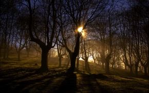 Picture forest, light, landscape, nature, fog, morning