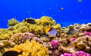 Picture fish, paint, Egypt, The red sea, coral reef