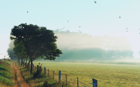 Picture the sky, grass, birds, nature, fog, Rosa, the fence, morning, roadside