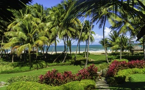 Picture sand, sea, beach, grass, the sun, tropics, palm trees, lawn, the bushes, Puerto Rico, San …