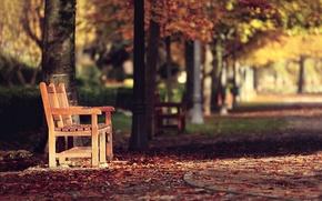 Wallpaper street, bench, autumn, the city