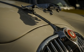Picture Jaguar, the hood, emblem, car, beige
