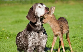 Picture dog, friendship, fawn