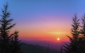 Picture forest, the sun, trees, mountains, sunrise, tree, morning