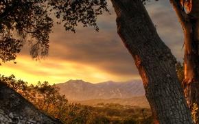 Wallpaper tree, mountains, dal