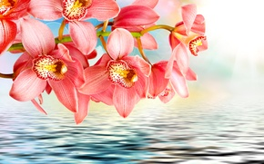 Picture water, flowers, pink, branch, orchids