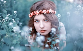 Picture summer, grass, look, girl, flowers, face, brown hair, wreath