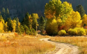Picture road, autumn, grass, trees, house