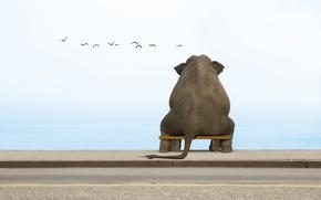 Wallpaper bench, elephant, seagulls