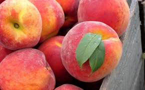 Picture leaves, yummy, peaches, Fruit, the fruit