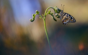 Picture macro, butterfly, insect, Wallpaper from lolita777, radenie