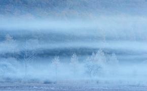 Picture field, trees, fog, slope, haze