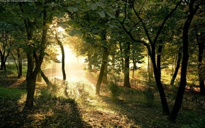 Picture the sun, light, Trees