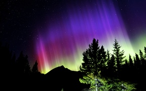 Picture the sky, stars, trees, night, Northern lights