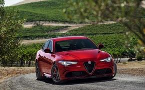 Picture Julia, Four-leaf clover, Alfa Romeo, Alfa Romeo, Giulia