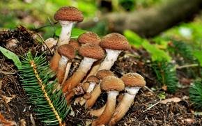 Picture autumn, macro, mushrooms, mushrooms