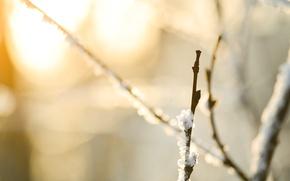 Wallpaper macro, snow, snow, macro, nature, bokeh, branches, 4608x3072, branches, nature, bokeh