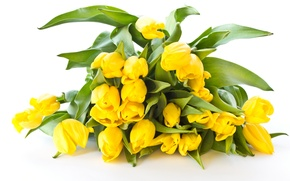 Picture bouquet, yellow, tulips, white background
