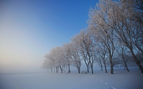 Picture winter, snow, trees, traces, fog, shop