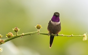 Picture bird, branch, Bud, Hummingbird, wildlife