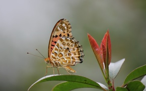 Picture leaves, butterfly, plant