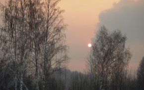Picture winter, the sky, trees, sunset, The sun, haze, twilight, grove, industrial zone, Kemerovo, Kirovskiy, Kuzbass