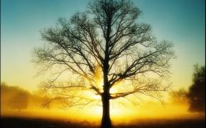 Wallpaper tree, the sun, 151, Light