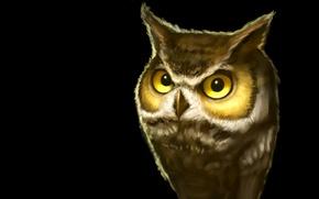 Picture the dark background, owl, bird, owl