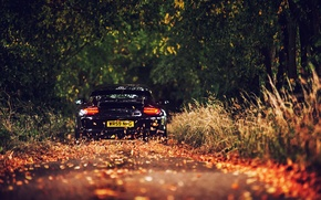 Wallpaper road, foliage, Porsche, black, GT3