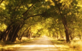 Picture road, autumn, Streets of Gold