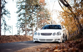 Picture autumn, forest, white, before, stance, Lexus GS