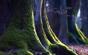 Picture macro, nature, tree, moss