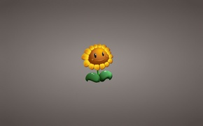 Picture flower, plant, sunflower, minimalism, Plants vs. Zombies