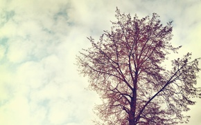Wallpaper the sky, clouds, landscape, nature, tree, vintage, sky, landscape, nature, vintage, clouds, tree