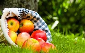 Wallpaper grass, basket, apples, red, fruit, napkin, ripe