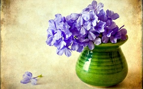 Wallpaper flower, purple, flowers, vase, Phlox