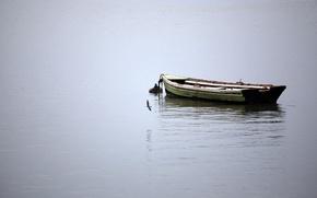 Wallpaper water, boat, calm, bird