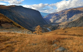 Picture autumn, Altay, larch