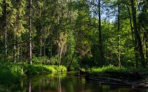 Picture forest, trees, river, Minsk, recica, Belarus.