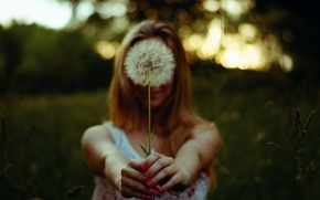 Picture girl, dandelion, hands