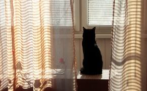 Picture cat, grass, cat, the sun, widescreen, Wallpaper, shadow, wallpaper, widescreen, background, the Wallpapers, full screen, …